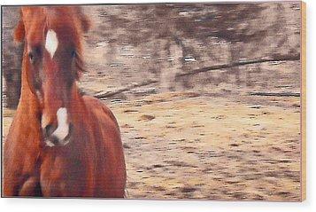 My Fine Friend The Flashy Chestnut Stallion Wood Print by Patricia Keller