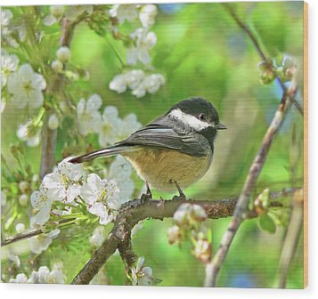 My Little Chickadee In The Cherry Tree Wood Print by Jennie Marie Schell