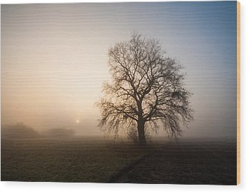 Mystic Morning Wood Print by Davorin Mance