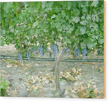 Napa Vineyard Wood Print by Paul Tagliamonte