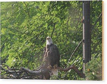National Zoo - Bald Eagle - 12122 Wood Print by DC Photographer