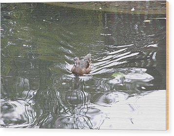 National Zoo - Duck - 121211 Wood Print by DC Photographer