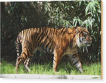 National Zoo - Tiger - 01138 Wood Print by DC Photographer