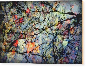 Natures Stained Glass Wood Print by Karen Wiles