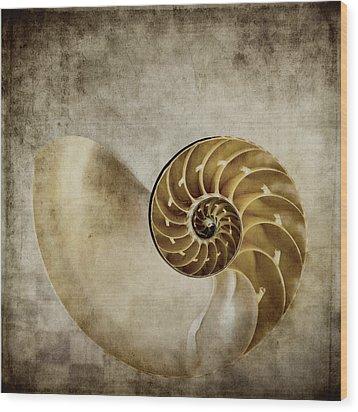 Nautilus Shell Wood Print by Carol Leigh