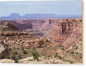 Needles Grand Canyon Wood Print by Adam Jewell