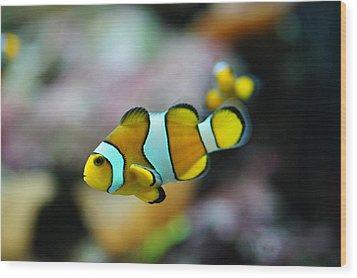 Nemo From Barcelona Wood Print by Stephan Yankov