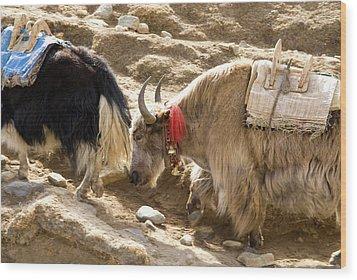 Nepal Yak Move Along The Everest Base Wood Print by David Noyes
