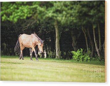 New Forest Pony Wood Print by Jane Rix