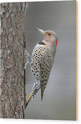 Northern Flicker Wood Print by Daniel Behm