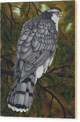 Northern Goshawk Wood Print by Rick Bainbridge