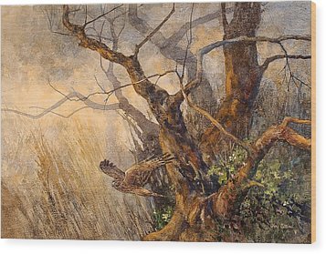 Northern Harrier Wood Print by Floy Zittin
