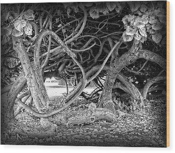 Oahu Ground Vines - Hawaii Wood Print by Daniel Hagerman