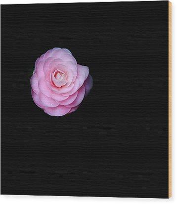 Oh Camellia Wood Print by Rebecca Cozart
