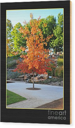 Oklahoma Fall Wood Print by Randi Grace Nilsberg