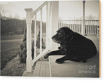 Old Dog On A Front Porch Wood Print by Diane Diederich