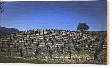 Old Vines Panorama Wood Print by Karen Stephenson