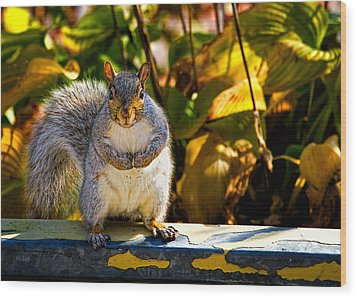 One Gray Squirrel Wood Print by Bob Orsillo