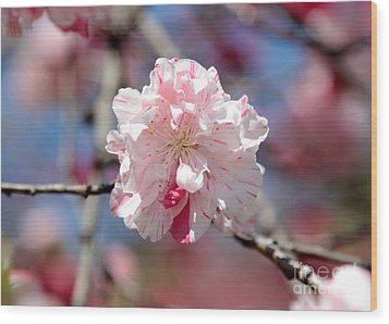 One Pink Blossom Wood Print by Carol Groenen