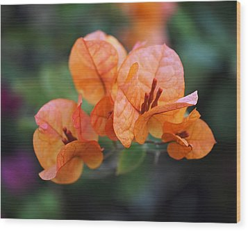 Orange Bougainvillea Wood Print by Rona Black