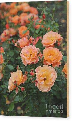 Orange Roses Wood Print by Carol Groenen