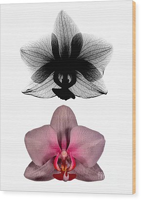 Orchid And Its X-ray Wood Print by Bert Myers