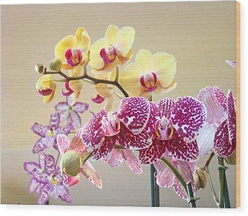 Orchid Art Prints Orchids Flowers Floral Bouquets Wood Print by Baslee Troutman