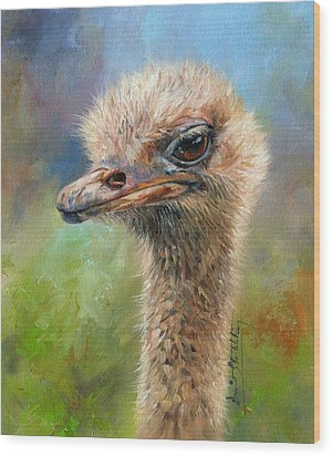 Ostrich Wood Print by David Stribbling