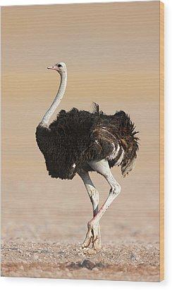 Ostrich Wood Print by Johan Swanepoel