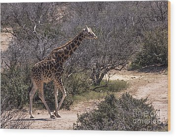 Out Of Africa Giraffe Wood Print by Janice Rae Pariza
