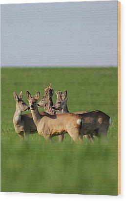 Pack Of Roe Deer Wood Print by Dragomir Felix-bogdan