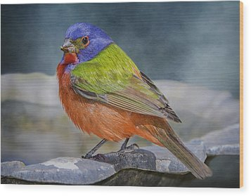 Painted Bunting In April Wood Print by Bonnie Barry