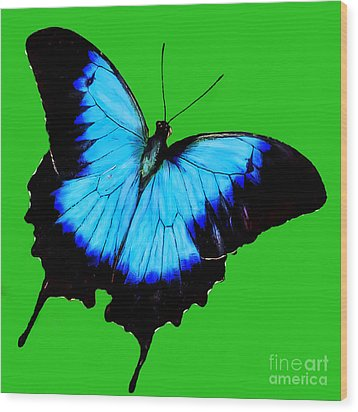 Painted Butterfly Wood Print by Bob and Nadine Johnston