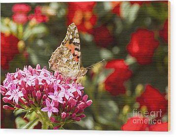 Painted Lady Butterfly Wood Print by Eyal Bartov
