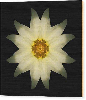 Pale Yellow Daffodil Flower Mandala Wood Print by David J Bookbinder
