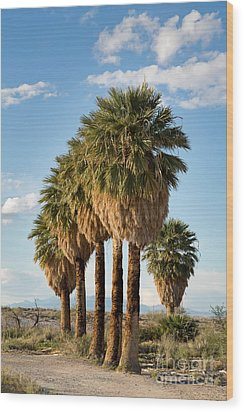 Palm Trees Wood Print by Jane Rix