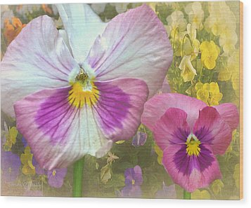 Pansy Duo Wood Print by Sandi OReilly