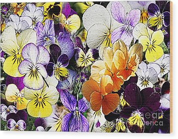 Pansy Posy Wood Print by Erica Hanel