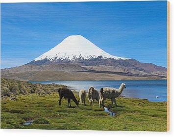 Parinacota Volcano Lake Chungara Chile Wood Print by Kurt Van Wagner