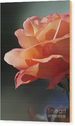 Partial Rose Wood Print by Chris Anderson