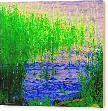 Peaceful Stream  Quebec Landscape Art Tall Grasses At The Lakeshore Waterscene Carole Spandau Wood Print by Carole Spandau