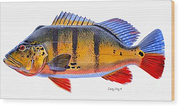 Peacock Bass Wood Print by Carey Chen