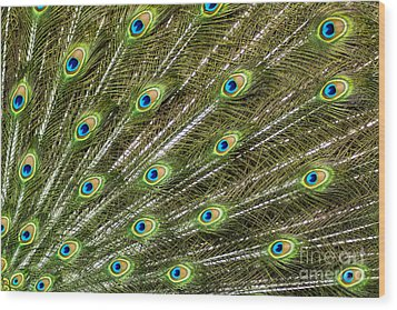 Peacock Feather Abstract Pattern Wood Print by Darleen Stry