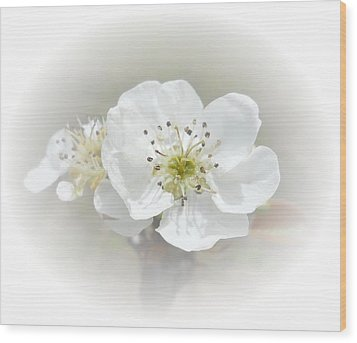 Pear Blossom Wood Print by Judy Hall-Folde