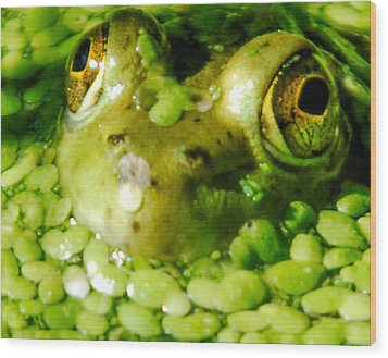 Peeping Through The Algae  Wood Print by Optical Playground By MP Ray