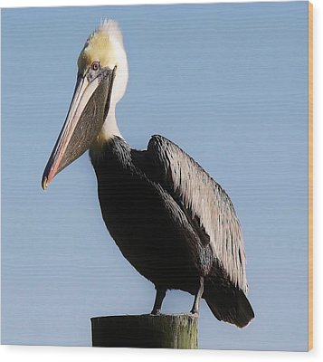 Pelican  Wood Print by Paulette Thomas