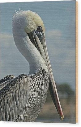 Pelican Profile 3 Wood Print by Ernie Echols