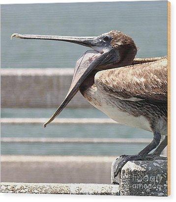 Pelican Yawn - Digital Painting Wood Print by Carol Groenen