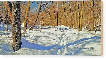 Wood Print featuring the photograph Pennsylvania Forest In Winter by A Gurmankin