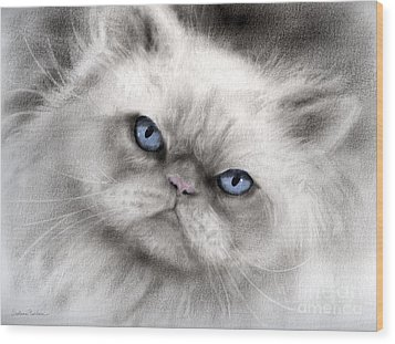 Persian Cat With Blue Eyes Wood Print by Svetlana Novikova